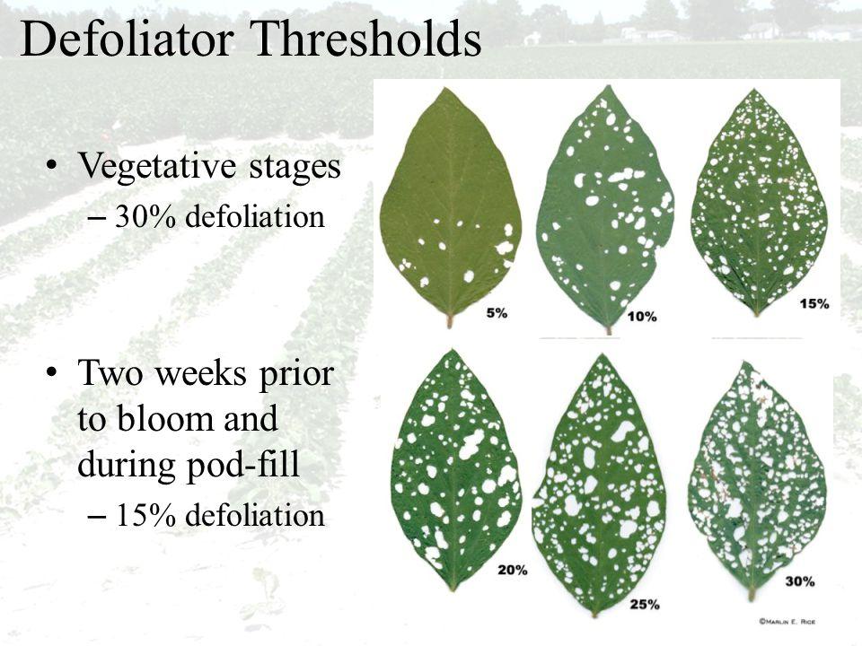 Defoliator Thresholds Vegetative stages – 30% defoliation Two weeks prior to bloom and during pod-fill – 15% defoliation