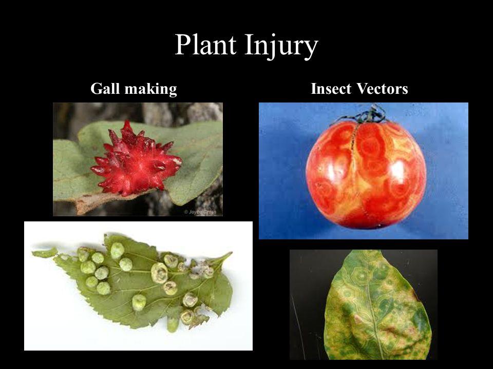 Plant Injury Gall makingInsect Vectors