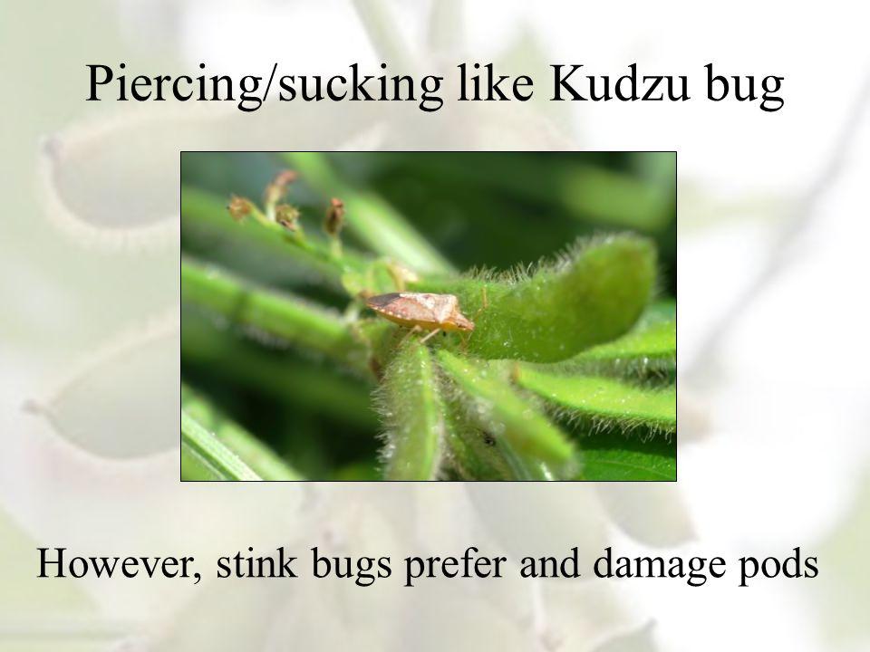 Piercing/sucking like Kudzu bug However, stink bugs prefer and damage pods