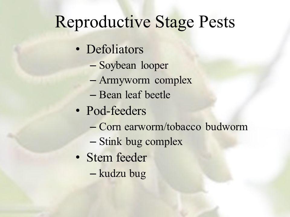 Reproductive Stage Pests Defoliators – Soybean looper – Armyworm complex – Bean leaf beetle Pod-feeders – Corn earworm/tobacco budworm – Stink bug complex Stem feeder – kudzu bug