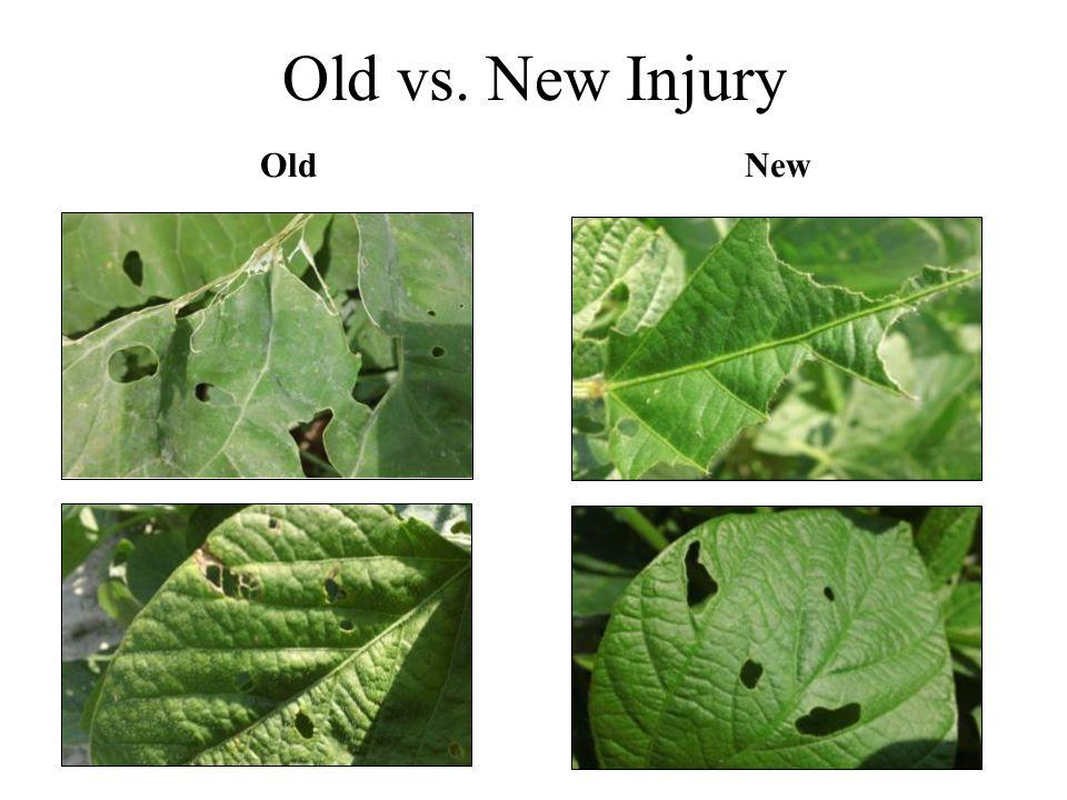 Old vs. New Injury OldNew