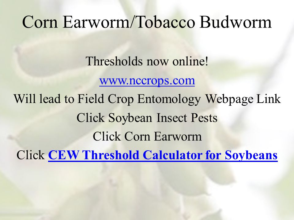 Corn Earworm/Tobacco Budworm Thresholds now online.