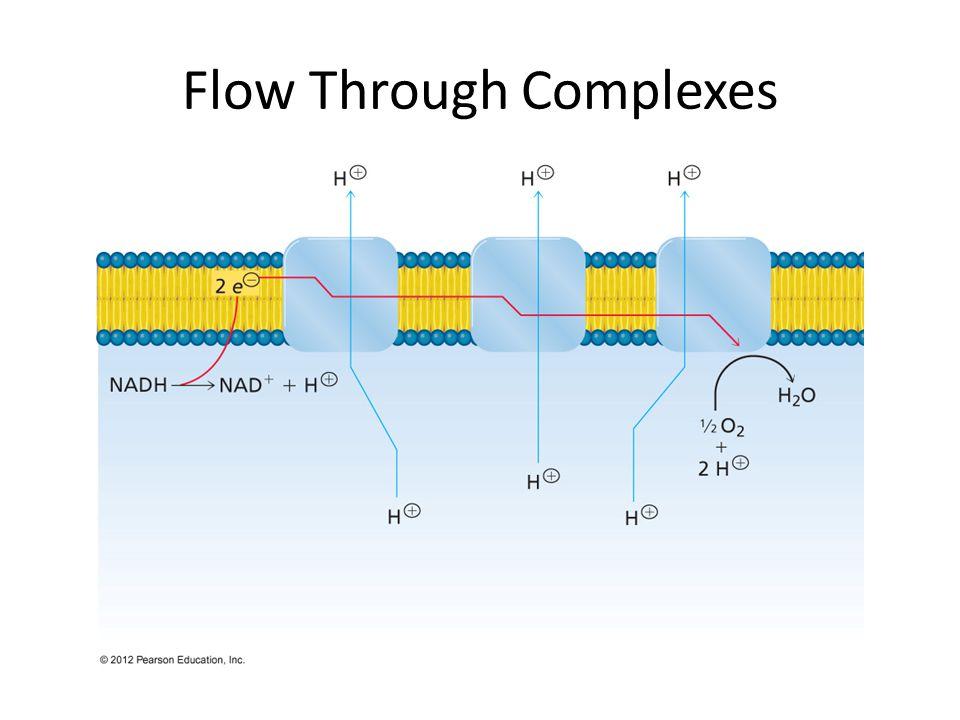 Flow Through Complexes