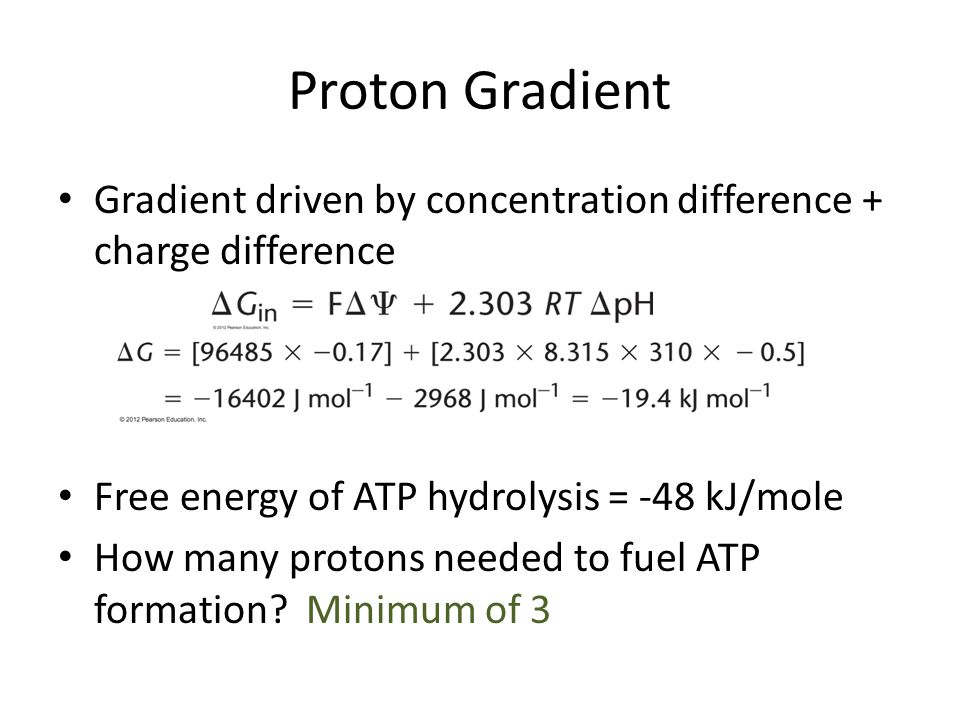 Proton Gradient Gradient driven by concentration difference + charge difference Free energy of ATP hydrolysis = -48 kJ/mole How many protons needed to