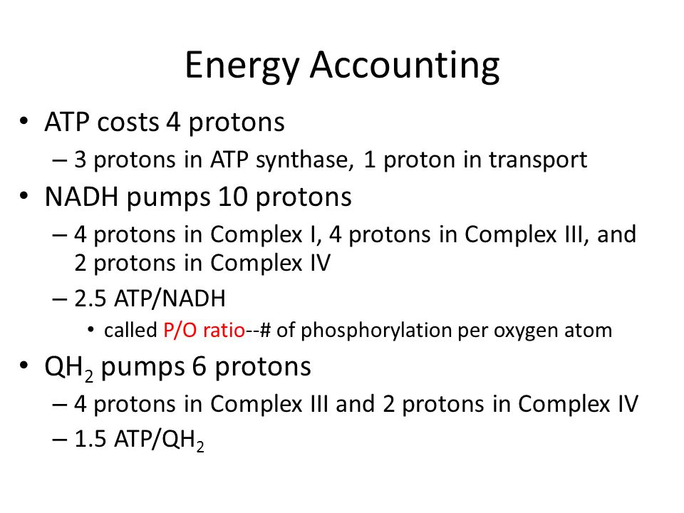 Energy Accounting ATP costs 4 protons – 3 protons in ATP synthase, 1 proton in transport NADH pumps 10 protons – 4 protons in Complex I, 4 protons in