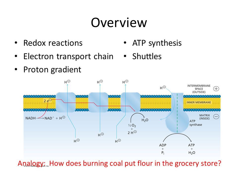 Overview Redox reactions Electron transport chain Proton gradient ATP synthesis Shuttles Analogy: How does burning coal put flour in the grocery store
