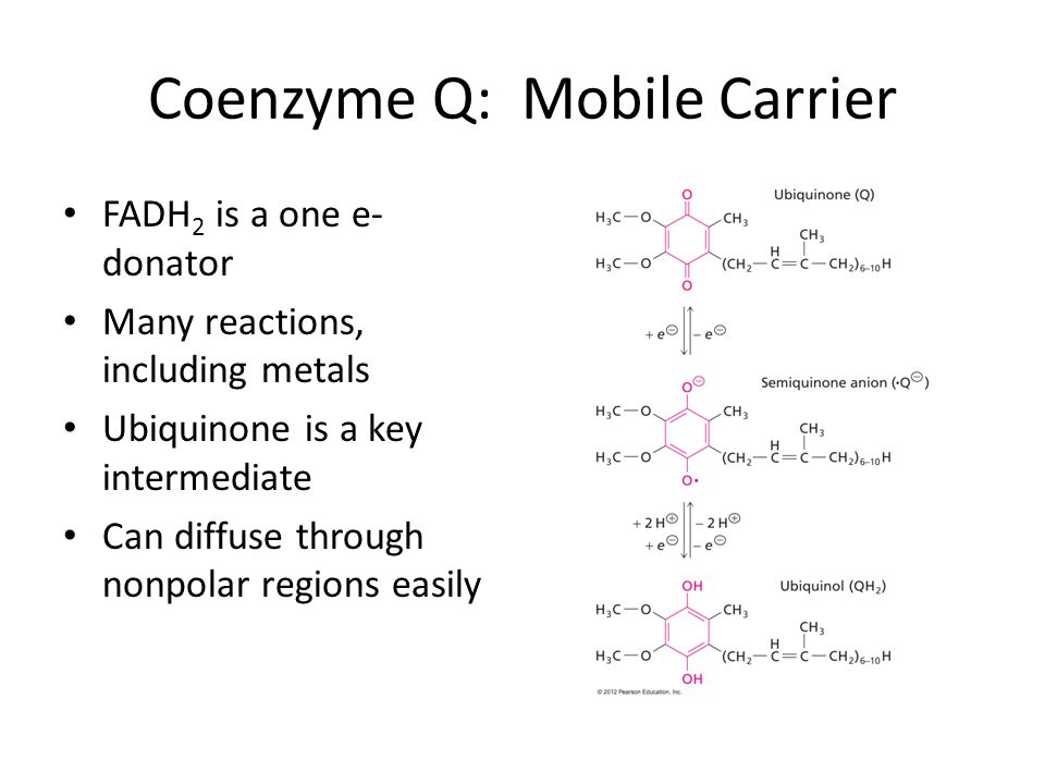 Coenzyme Q: Mobile Carrier FADH 2 is a one e- donator Many reactions, including metals Ubiquinone is a key intermediate Can diffuse through nonpolar r