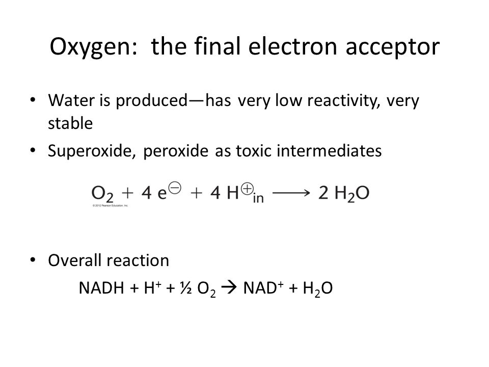 Oxygen: the final electron acceptor Water is producedhas very low reactivity, very stable Superoxide, peroxide as toxic intermediates Overall reaction