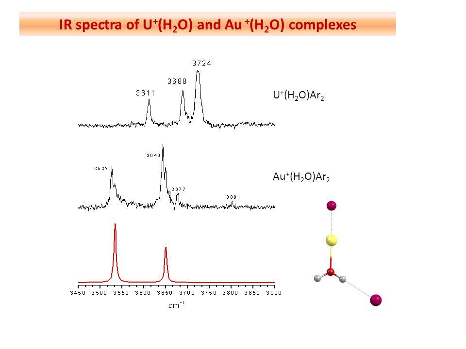 U + (H 2 O)Ar 2 Au + (H 2 O)Ar 2 IR spectra of U + (H 2 O) and Au + (H 2 O) complexes