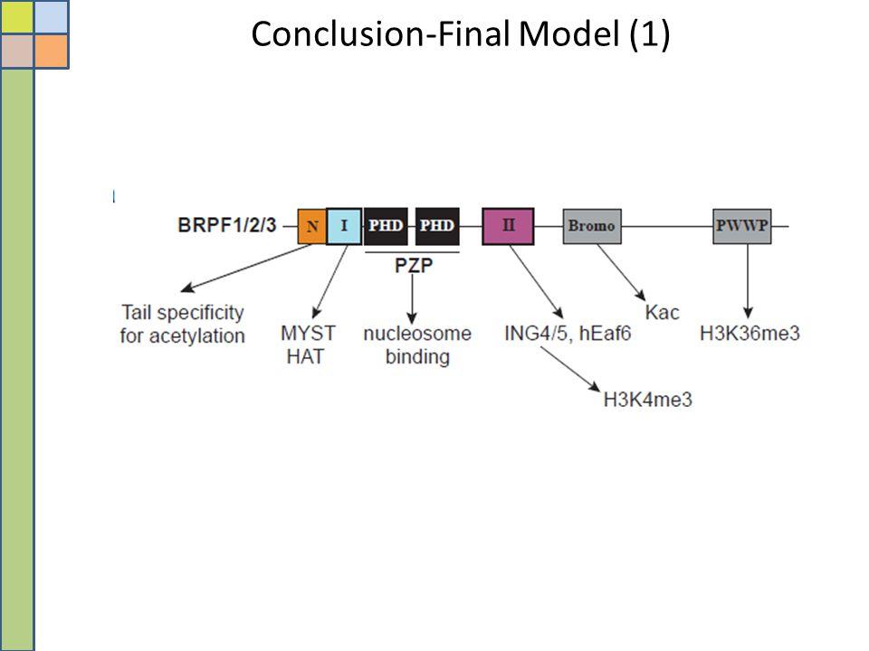 Conclusion-Final Model (1)