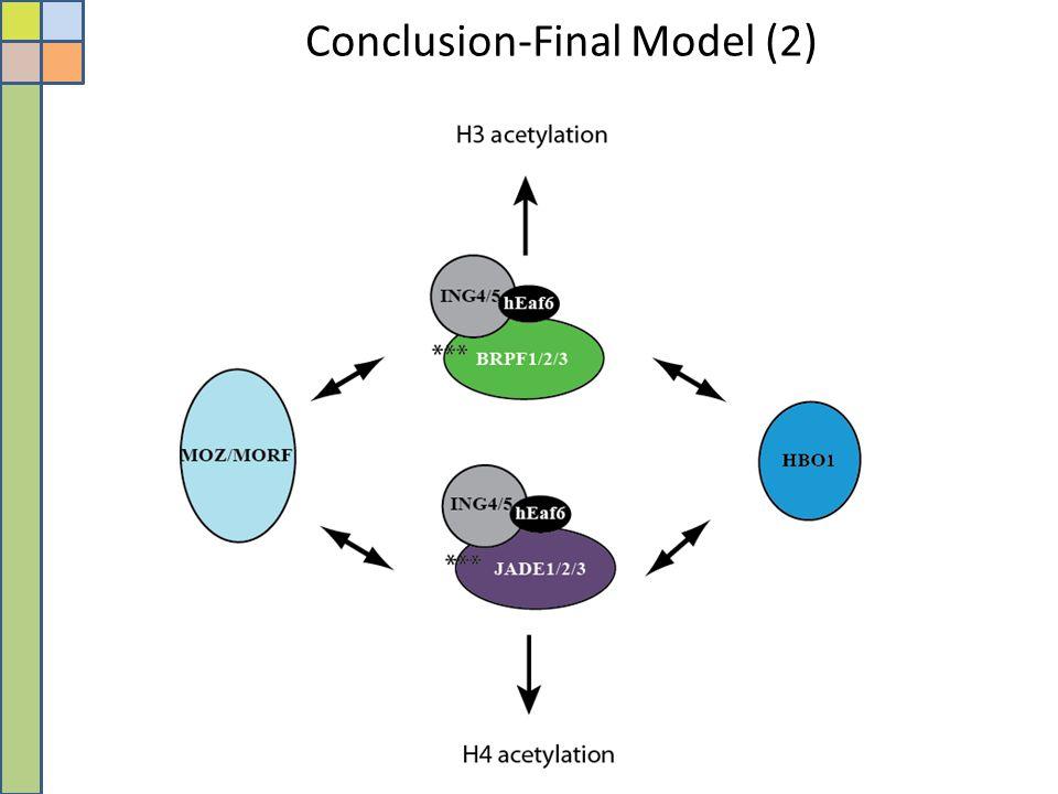 Conclusion-Final Model (2)
