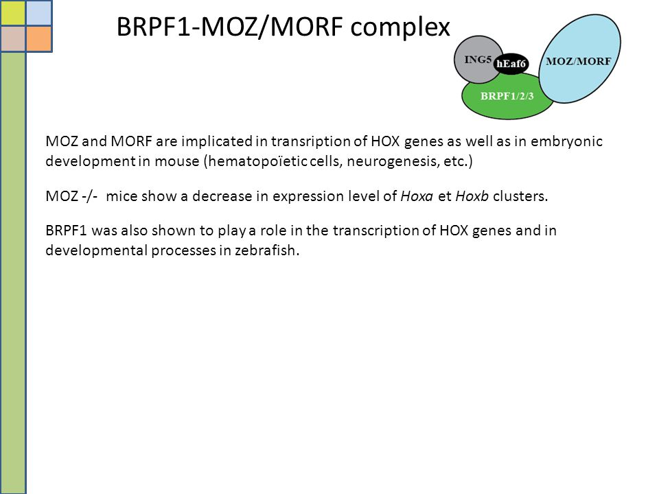 BRPF1-MOZ/MORF complex MOZ and MORF are implicated in transription of HOX genes as well as in embryonic development in mouse (hematopoïetic cells, neu