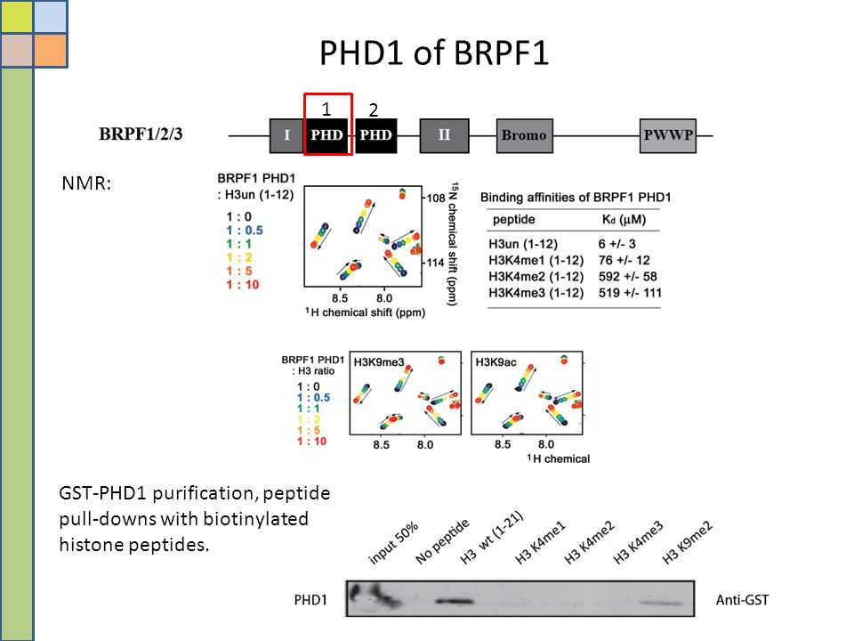 PHD1 of BRPF1 GST-PHD1 purification, peptide pull-downs with biotinylated histone peptides. NMR: 1 2