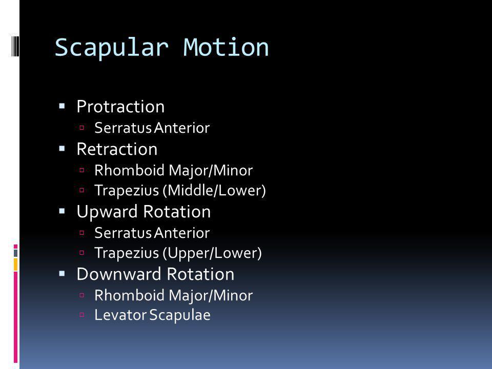 Scapular Motion Protraction Serratus Anterior Retraction Rhomboid Major/Minor Trapezius (Middle/Lower) Upward Rotation Serratus Anterior Trapezius (Up