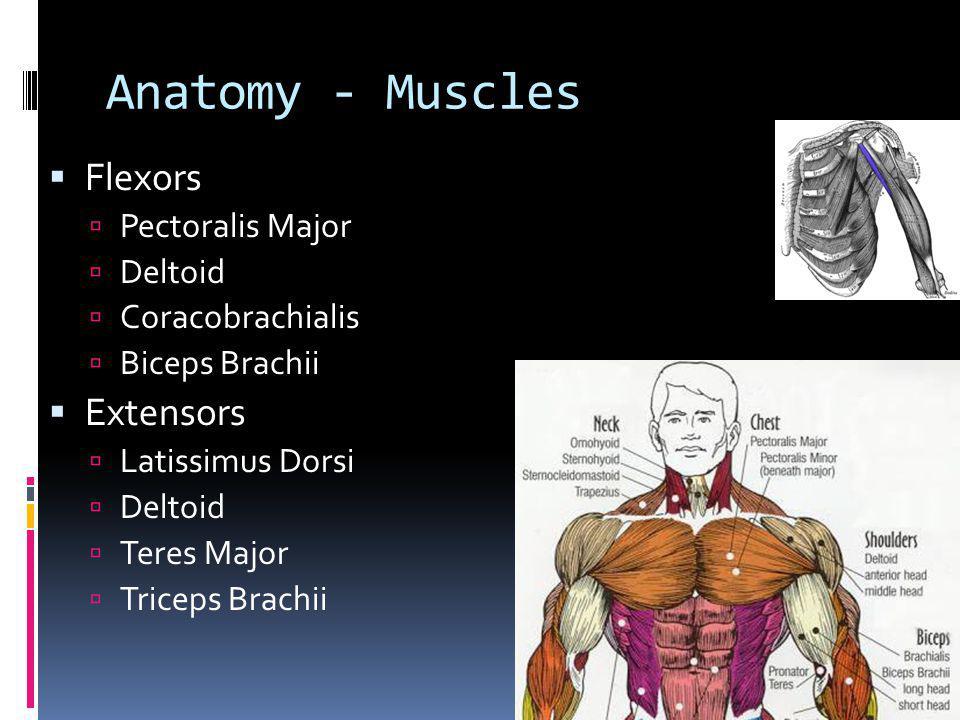 Anatomy - Muscles Abduction Deltoid Supraspinatus Biceps Brachii Adduction Pectoralis Major Latissimus Dorsi Infraspinatus Teres Major Coracobrachialis Trapezius (Scapula) Rhomboideus Major & Minor (Scapula)