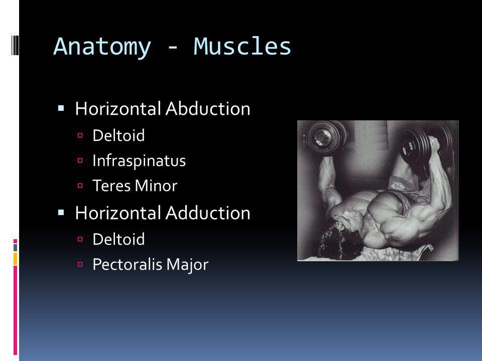 Anatomy - Muscles Horizontal Abduction Deltoid Infraspinatus Teres Minor Horizontal Adduction Deltoid Pectoralis Major