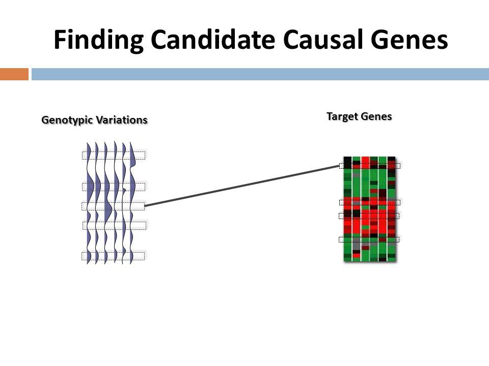 Finding Candidate Causal Genes Genotypic Variations Target Genes