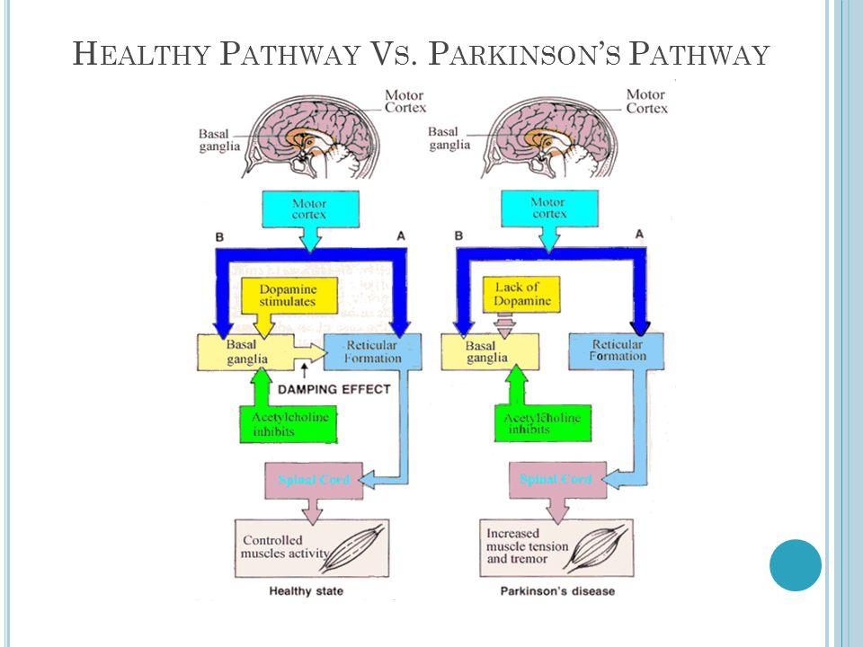 H EALTHY P ATHWAY V S. P ARKINSON S P ATHWAY