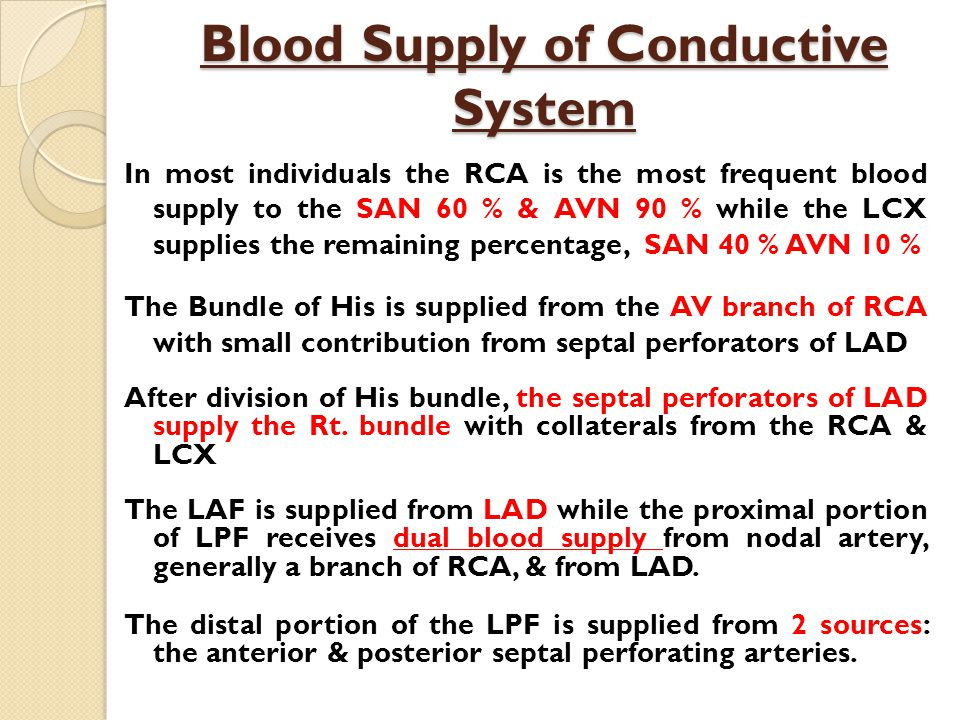 Blood Supply of Conductive System In most individuals the RCA is the most frequent blood supply to the SAN 60 % & AVN 90 % while the LCX supplies the remaining percentage, SAN 40 % AVN 10 % The Bundle of His is supplied from the AV branch of RCA with small contribution from septal perforators of LAD After division of His bundle, the septal perforators of LAD supply the Rt.