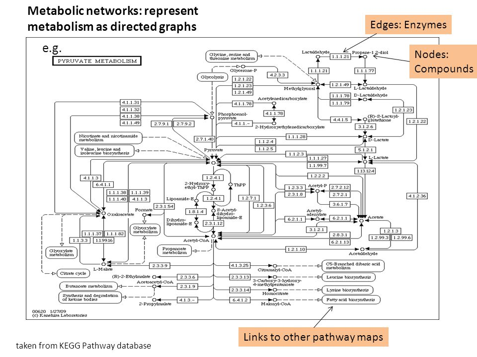 Metabolic networks: represent metabolism as directed graphs taken from KEGG Pathway database Nodes: Compounds Edges: Enzymes Links to other pathway ma