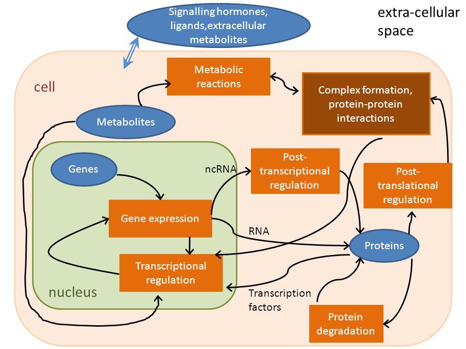 Albert, R.J Cell Sci 2005;118:4947-4957 C.