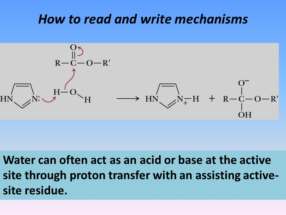 How to read and write mechanisms Water can often act as an acid or base at the active site through proton transfer with an assisting active- site residue.
