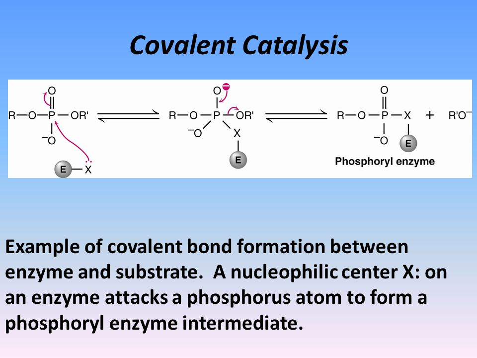 Covalent Catalysis Example of covalent bond formation between enzyme and substrate.