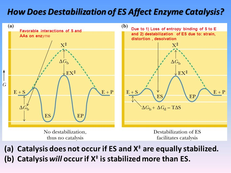 How Does Destabilization of ES Affect Enzyme Catalysis.