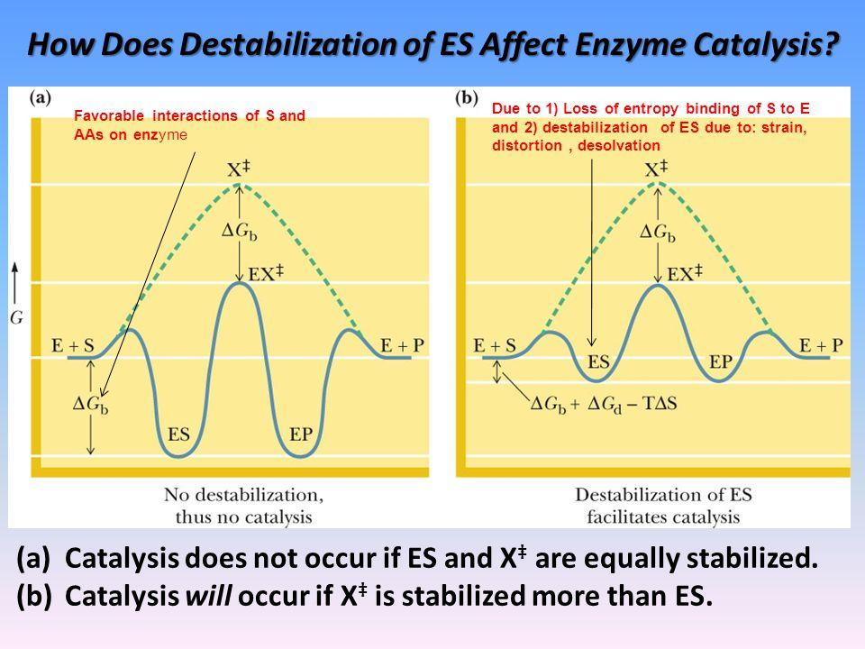 How Does Destabilization of ES Affect Enzyme Catalysis.