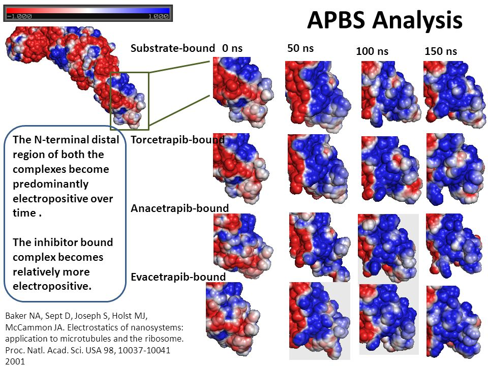 APBS Analysis The N-terminal distal region of both the complexes become predominantly electropositive over time. The inhibitor bound complex becomes r