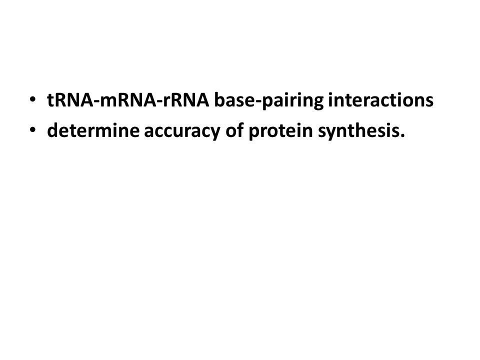 tRNA-mRNA-rRNA base-pairing interactions determine accuracy of protein synthesis.
