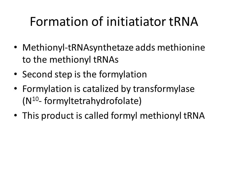 Formation of initiatiator tRNA Methionyl-tRNAsynthetaze adds methionine to the methionyl tRNAs Second step is the formylation Formylation is catalized
