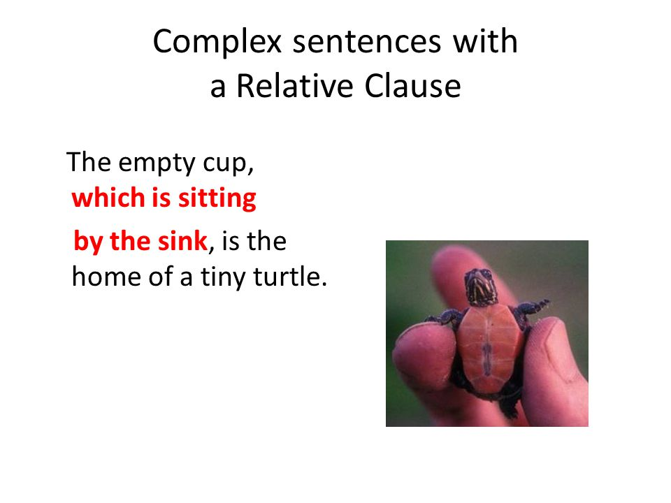 Complex sentences with a Relative Clause The empty cup, which is sitting by the sink, is the home of a tiny turtle.