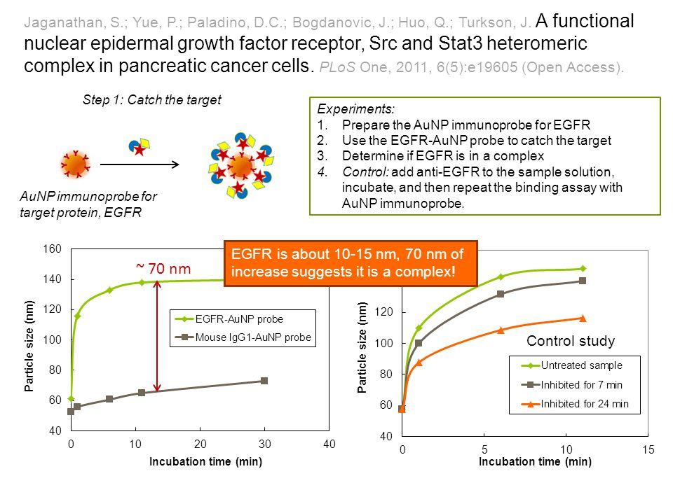 Jaganathan, S.; Yue, P.; Paladino, D.C.; Bogdanovic, J.; Huo, Q.; Turkson, J. A functional nuclear epidermal growth factor receptor, Src and Stat3 het