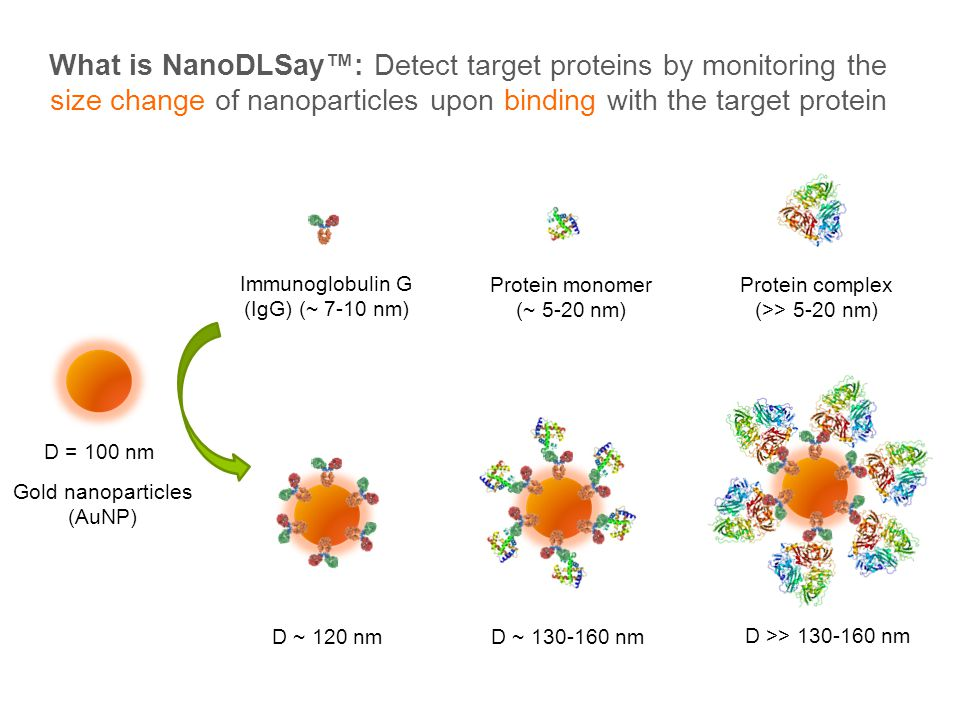 What is NanoDLSay: Detect target proteins by monitoring the size change of nanoparticles upon binding with the target protein Gold nanoparticles (AuNP