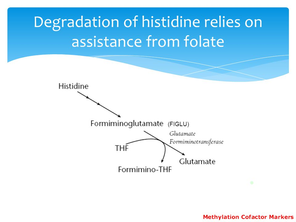 (FIGLU) Degradation of histidine relies on assistance from folate