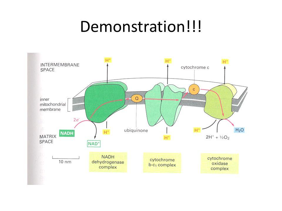 Demonstration!!!