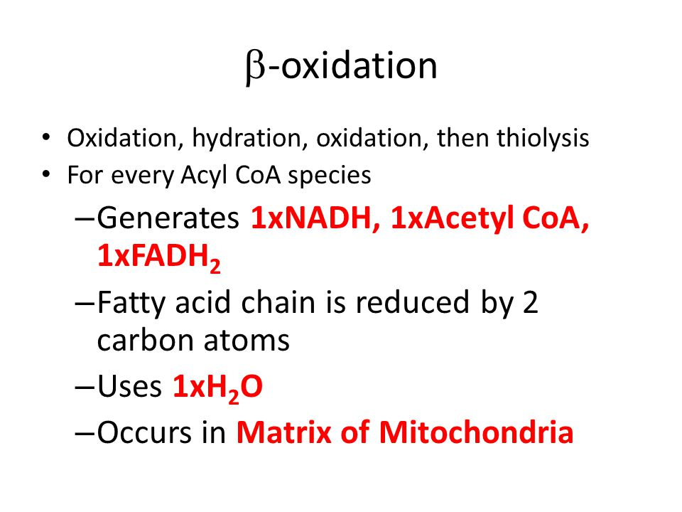 -oxidation Oxidation, hydration, oxidation, then thiolysis For every Acyl CoA species – Generates 1xNADH, 1xAcetyl CoA, 1xFADH 2 – Fatty acid chain is reduced by 2 carbon atoms – Uses 1xH 2 O – Occurs in Matrix of Mitochondria