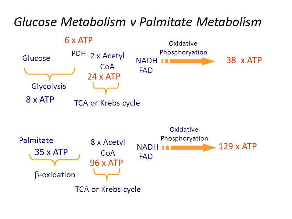 Have we forgotten anything? 2 x Acetyl CoA NADH Oxidative Phosphoryation 38 x ATP TCA or Krebs cycle Glycolysis Glucose FAD 24 x ATP 8 x ATP 6 x ATP P