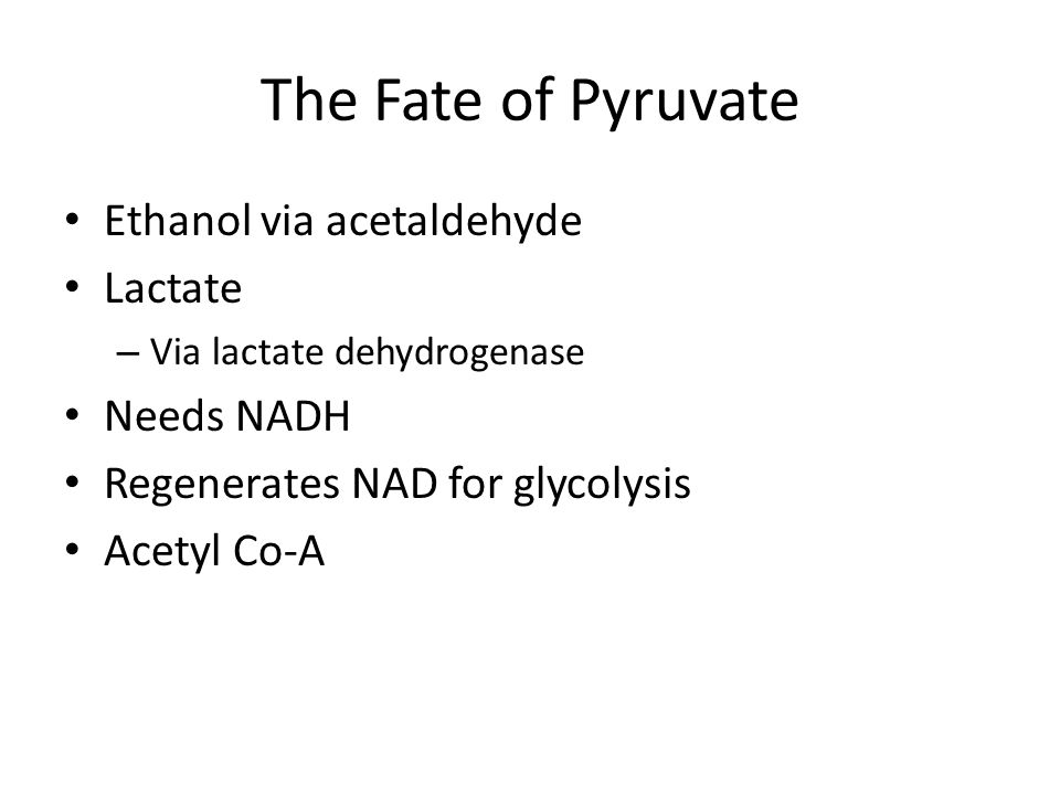 Acetyl CoA synthesis Pyruvate dehydrogenase complex Generates Acetyl CoA, NADH Occurs in the mitochondria matrix 3 Enzymes – Pyruvate decarboxylase – Lipoamide-reductase-transacetylase – Dihydrolipoyl dehydrogenase 5 Co-factors – FAD – NAD – CoA – Lipoamide – TPP