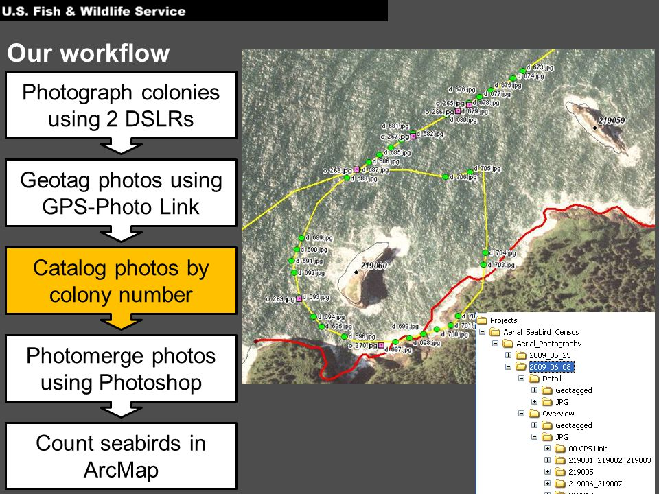 Photograph colonies using 2 DSLRs Geotag photos using GPS-Photo Link Catalog photos by colony number Photomerge photos using Photoshop Count seabirds in ArcMap Our workflow