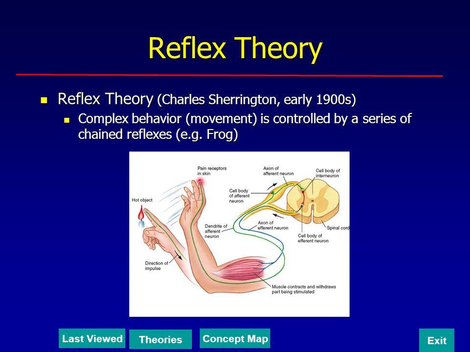 Reflex Theory Reflex Theory (Charles Sherrington, early 1900s) Reflex Theory (Charles Sherrington, early 1900s) Complex behavior (movement) is control