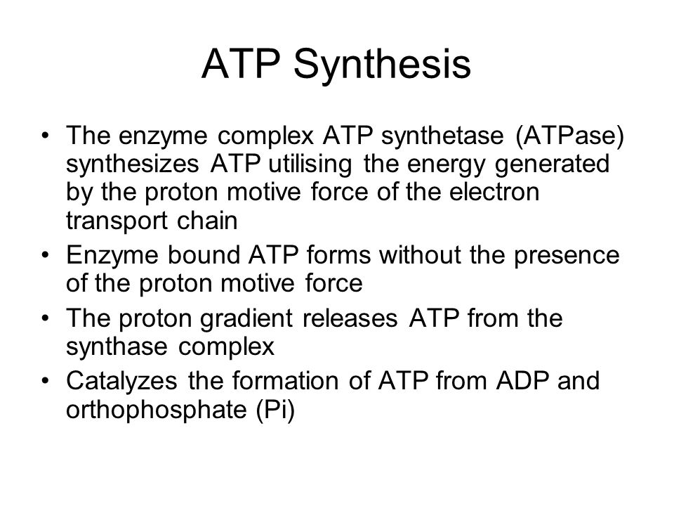 ATP Synthesis The enzyme complex ATP synthetase (ATPase) synthesizes ATP utilising the energy generated by the proton motive force of the electron transport chain Enzyme bound ATP forms without the presence of the proton motive force The proton gradient releases ATP from the synthase complex Catalyzes the formation of ATP from ADP and orthophosphate (Pi)