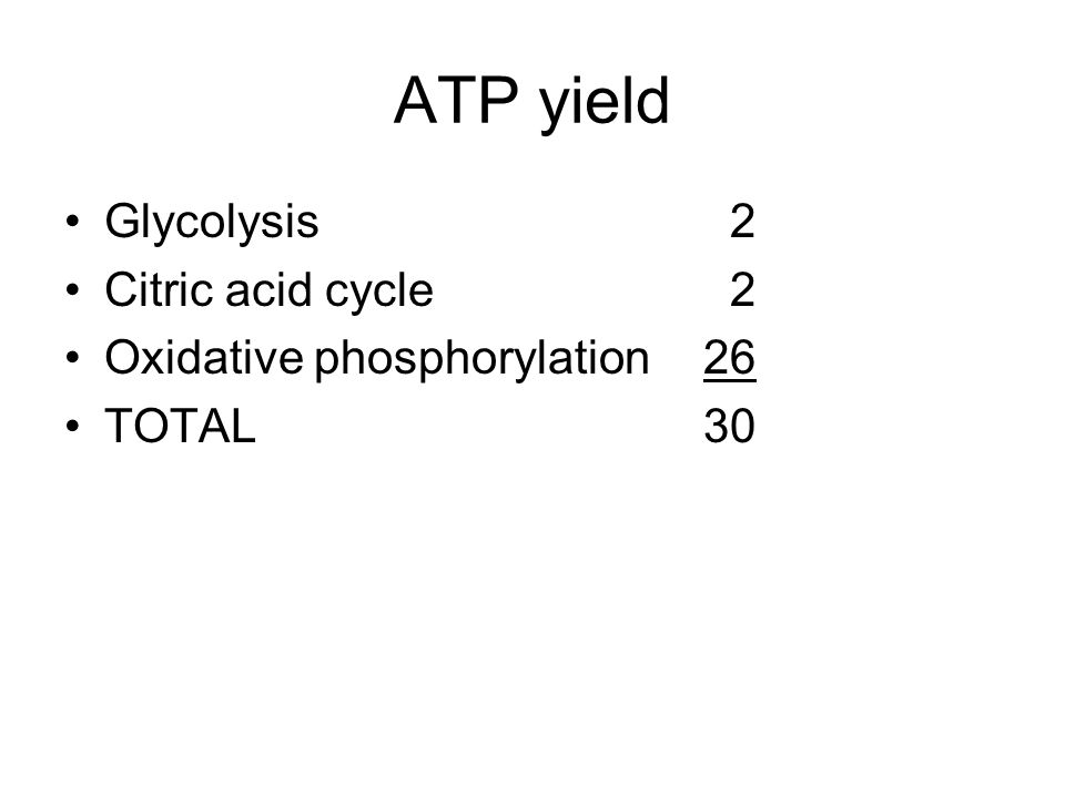 ATP yield Glycolysis 2 Citric acid cycle 2 Oxidative phosphorylation 26 TOTAL30