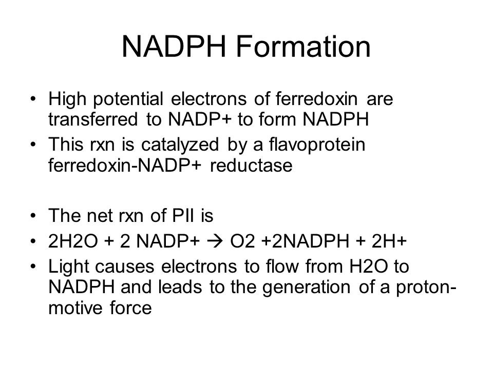 NADPH Formation High potential electrons of ferredoxin are transferred to NADP+ to form NADPH This rxn is catalyzed by a flavoprotein ferredoxin-NADP+ reductase The net rxn of PII is 2H2O + 2 NADP+ O2 +2NADPH + 2H+ Light causes electrons to flow from H2O to NADPH and leads to the generation of a proton- motive force