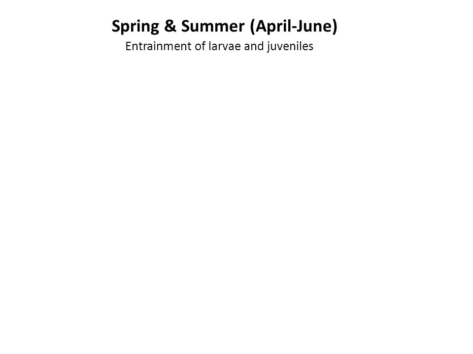 Spring & Summer (April-June) Entrainment of larvae and juveniles