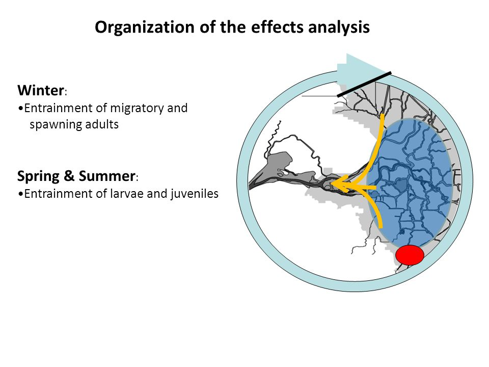 Fall : Rearing habitat of maturing pre-adults Spring & Summer : Entrainment of larvae and juveniles Winter : Entrainment of migratory and spawning adults Organization of the effects analysis