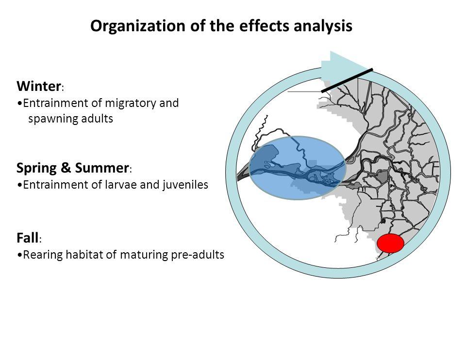 Fall (September-December) Rearing habitat of maturing pre-adults