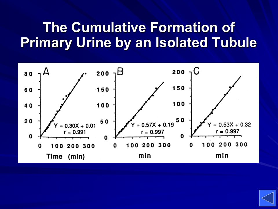 The Cumulative Formation of Primary Urine by an Isolated Tubule