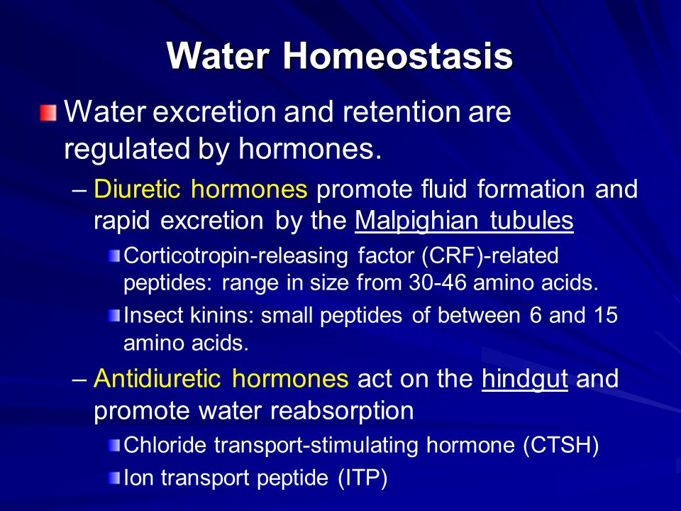 Water Homeostasis Water excretion and retention are regulated by hormones. – –Diuretic hormones promote fluid formation and rapid excretion by the Mal